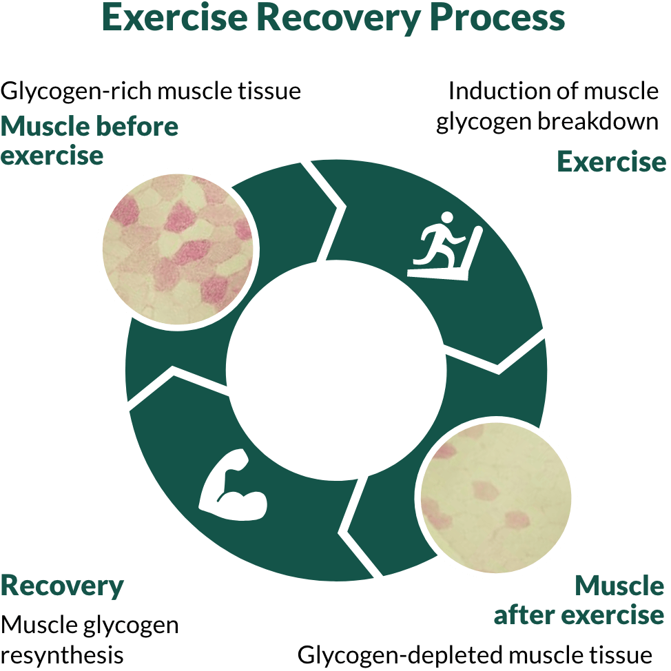 img-Exercise-Recovery-Process@2x